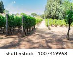 vineyard green rows with... | Shutterstock . vector #1007459968
