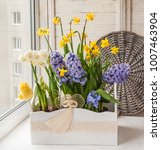 white and yellow daffodils and... | Shutterstock . vector #1007463904