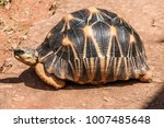 The Radiated Tortoise ...