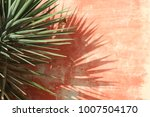 Close Up View Of Yucca Long...
