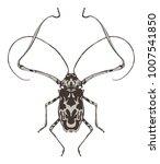 harlequin beetle insect... | Shutterstock . vector #1007541850