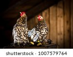 Portrait Of Booted Bantam