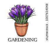 crocus in a pot. hand drawn... | Shutterstock .eps vector #1007614048