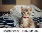 Stock photo grey kitten on blanket 1007635003