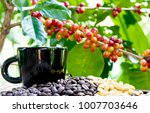 group of ripe and raw coffee... | Shutterstock . vector #1007703646