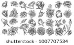 flower rose and buds with... | Shutterstock .eps vector #1007707534