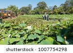 beautiful lotus and waterlily... | Shutterstock . vector #1007754298
