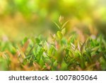 leaf growing with sunshine ... | Shutterstock . vector #1007805064