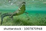 wild saltwater crocodile... | Shutterstock . vector #1007870968