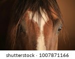 Stock photo a picture of an adorable quarter horse with a white heart n his forehead that turns into a white 1007871166