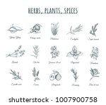 herbs  plants and spices vector ... | Shutterstock .eps vector #1007900758