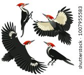 American Pileated Woodpeckers...