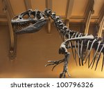 Allosaurus Fragilis Skeleton