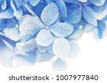 Soft Blue Hydrangea  Hydrangea...