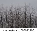 Bare Trees And Twigs Against A...