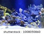 undersea world.  group of fish... | Shutterstock . vector #1008050860