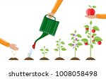 growth of plant  from sprout to ... | Shutterstock .eps vector #1008058498