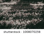 gardening  weeding weeds....   Shutterstock . vector #1008070258