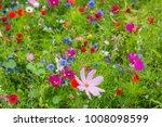 a full frame photograph of... | Shutterstock . vector #1008098599