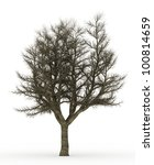 dead tree isolated on white | Shutterstock . vector #100814659