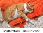 bright red cat sweetly sleeping ... | Shutterstock . vector #1008149920