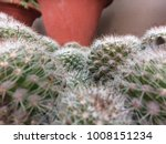 Small photo of Cactus plant grows in desert's and during the unfavourable condition cactus plant Store water.