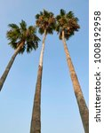 three palm trees heading to... | Shutterstock . vector #1008192958
