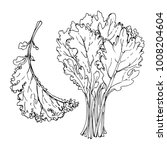 kale. the greens drawn by a... | Shutterstock .eps vector #1008204604