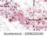 background of beautiful pink... | Shutterstock . vector #1008220240