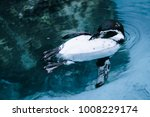 Very Relaxed Penguin In High...