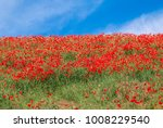 common poppy  papaver rhoeas ... | Shutterstock . vector #1008229540