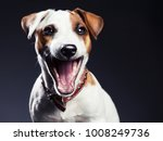 laughing dog. smiling pet.... | Shutterstock . vector #1008249736