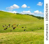 small herd of cows on slope of... | Shutterstock . vector #1008256504