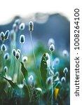 nature wild meadow flowers... | Shutterstock . vector #1008264100