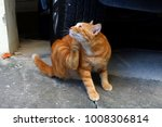 Small photo of Orange Cats sat up chin.