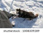 blue eyed black dog breed... | Shutterstock . vector #1008339289