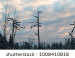 dry trees in the winter forest... | Shutterstock . vector #1008410818