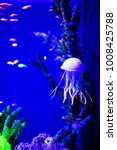 beautiful jellyfish  medusa in... | Shutterstock . vector #1008425788