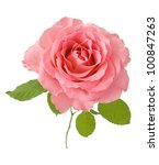 Stock photo pink rose isolated on white background 100847263