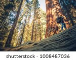 Caucasian Hiker Walking on the Fallen Redwood Sequoia Tree. Giant Sequoia Ancient Forest Exploring - stock photo