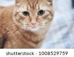 Stock photo ginger cat on the bed 1008529759