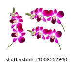 Beautiful Purple Orchids...