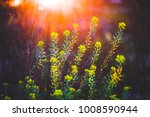 nature spring meadow flowers... | Shutterstock . vector #1008590944