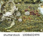Small photo of Acorn Barnacle attached to the surface of rocks on the seashore in a cloudy day.