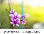 purple orchide with a blurry... | Shutterstock . vector #1008604399