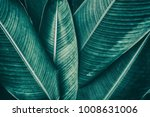 tropical palm leaf texture ... | Shutterstock . vector #1008631006