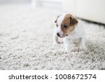 puppy dog jack russell terrier... | Shutterstock . vector #1008672574