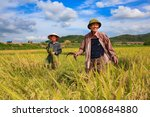 two man are harvesting rice on...   Shutterstock . vector #1008684880