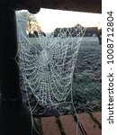 Frozen Spiders Cobweb