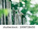 the bird wagtail sitting on a... | Shutterstock . vector #1008728650